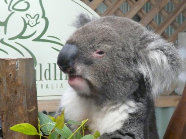 Australia - 57