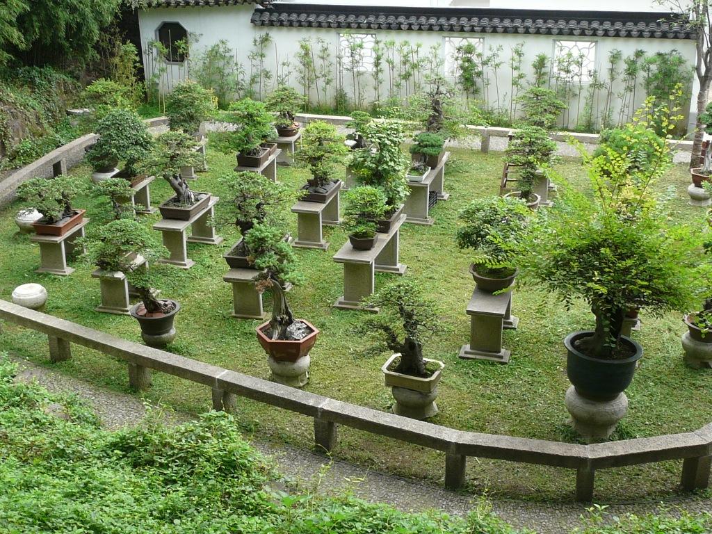 China 2009 - Jardin de bonsais ...