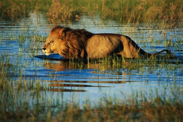Okavango - 6