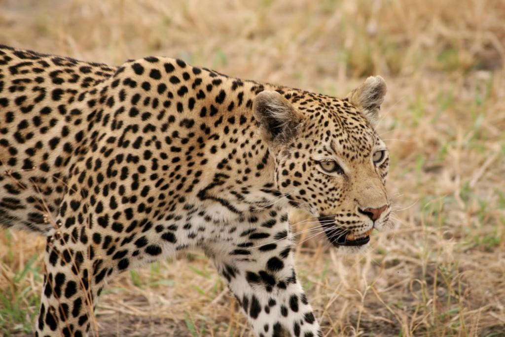 Okavango - 7