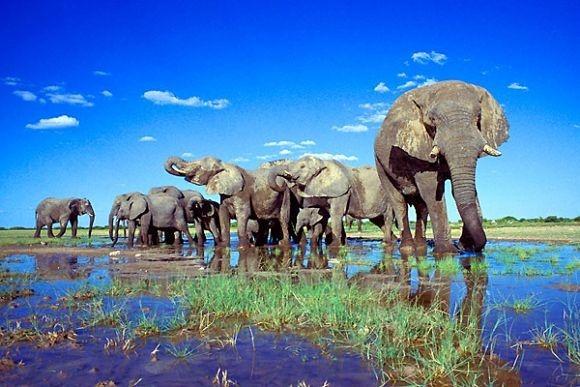 Okavango - 9